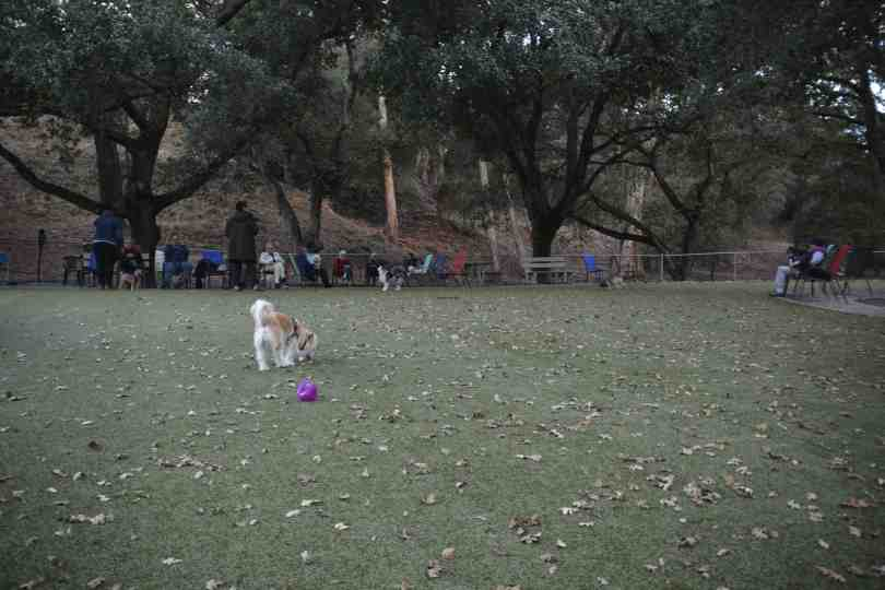 Del Valle Dog Park 8